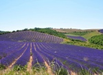 Peter Mayle: Still passionate about Provence