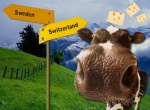 Newly Swissed: Some silly (but real) questions about Switzerland
